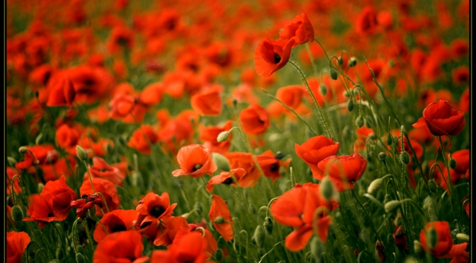 Remembrance Services