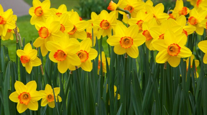 Mothering Sunday – 11th March