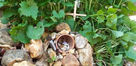 Easter Garden - Sorrel 3