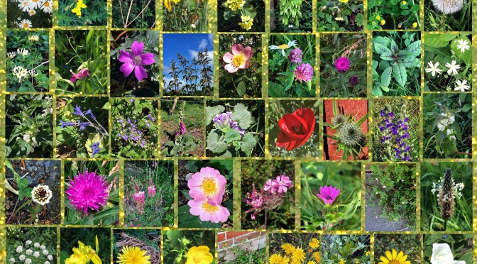 A Gallery of Flowers
